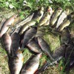 Flott fangst